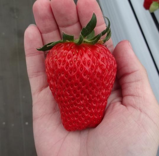 白久農園 1番果