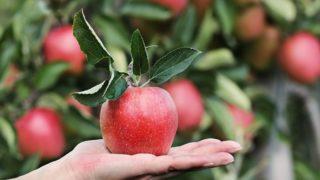 手の上のりんご