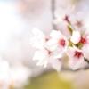 東大の祝辞 桜