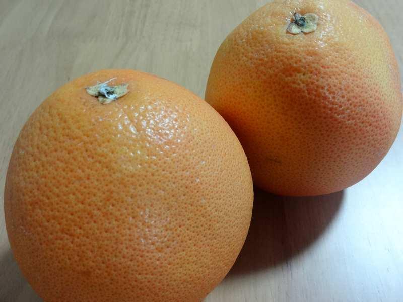 グレープフルーツの外観